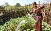 Marita Kafera waters her kitchen garden, Malawi. Photo: Jennifer Nolan / Concern Worldwide.
