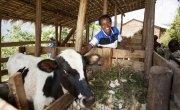 Violette Bukeyeneza with her cow. Photo: Abbie Trayler-Smith / Concern Worldwide.