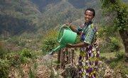 Violette Bukeyeneza watering her home garden at her home in Bukinanyana, Cibitoke. Photo: Abbie Trayler-Smith / Concern Worldwide.