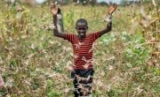 A farmer's son raises his arms as he is surrounded by desert locusts while trying to chase them away from his crops, in Katitika village, Kitui county, Kenya. Credit: Ben Curtis/AP/Shutterstock