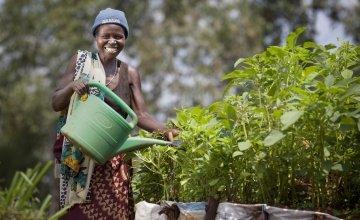 Euphemia Inina waters her market garden at her home in Mabayi, Cibitoke. Photo: Abbie Trayler-Smith / Concern Worldwide.