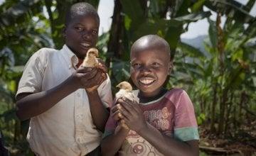 Kevin Niyomuhoza (6) and Olivier Iranyumviye (10) with their chickens. Photo: Abbie Trayler-Smith / Concern Worldwide.