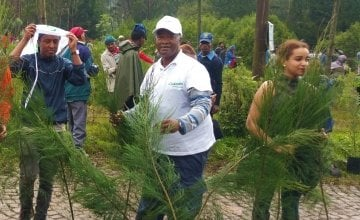 A national tree-planting drive in Ethiopia.