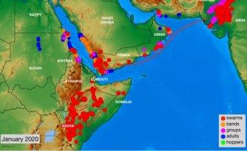 East Africa locust infestation map