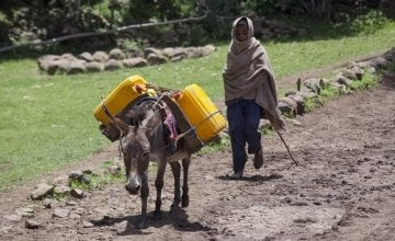 A donkey carries water to different families as there is no access to piped water at the homes of many Ethiopians in Gelsha, near Kombolsha, Wollo, Wello in August 2014. Photograph taken by Petterik Wiggers/Panos Pictures/Concern Worldwide.