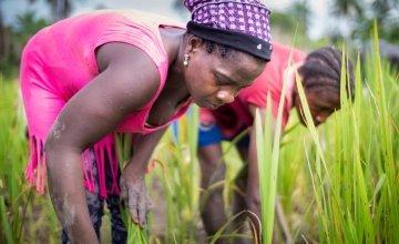 Kebah Youkou, a member of one of Concern's farmer field schools in Lofa County, Liberia. Photograph taken by Kieran McConville/Concern Worldwide.