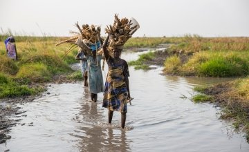 Women carry firewood through the swamps in South Sudan. Photo: Kieran McConville/Concern Worldwide.