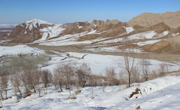 Orchard of Kozur community forest during winter in Afghanistan.
