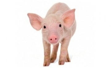 Buy this little piggy as a Concern gifts and help provide income and security for familes in the developing world, supported by our livelihoods programmes.