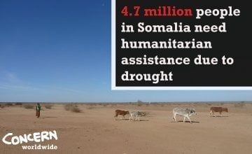 A farmer herds cattle in the Gabiley district of Somaliland, Somalia. Credit: Concern Worldwide.