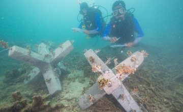 Divers trained by Concern Worldwide inspect the jackstones with coral fragments that were just installed. These jackstones will eventually turn into an artificial reef which will aid in fish production and help the livelihood of the many local fishermen. Photo: Steve De Neef / Concern Worldwide.