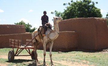 A camel-drawn cart used to transport rural dwellers to nearby health centres.