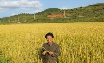 A farmer in Democratic People's Republic of Korea. Photo: Concern Worldwide.