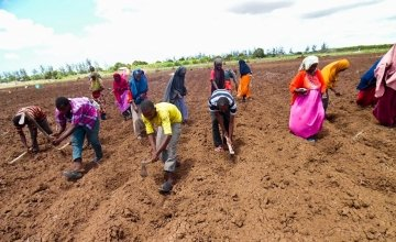 Somalia Jowhar Awdhegle Farmer Field School group planting Maize and Groundnut crops on their communal farm. Photo: Dustin Caniglia/ Somalia /2015