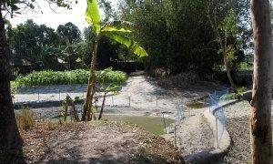 Netted small pond beside banana trees, crop filed, famed vegetation and bamboo thickets beside local houses, Dhubni village, Singimari Union, Hatibanda, Lalmonirhat, 2019.