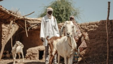 Hassana Mahamadou (30) and the Veterinary auxiliary/Community animal health worker, Ibrahima Oumarou checks the health of the goat. Each beneficiary received a goat to increase their income, Niger. Photo: Ollivier Girard/Concern Worldwide.