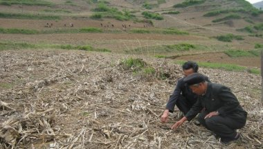 Multi-sector nutrition and food security project – DPRK – Final evaluation