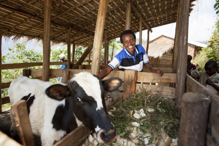Violette Bukeyeneza (45) with her cow. Photo: Abbie Trayler-Smith / Concern Worldwide.