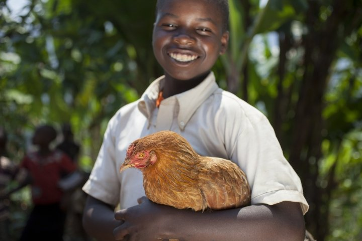 Olivier Iranyumviye (10) son of Alphonsine Niyonzima (21) with his family's chickens. Photo: Abbie Trayler-Smith / Concern Worldwide.