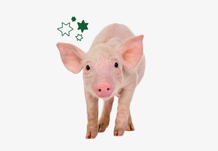 Concern Gifts Pig