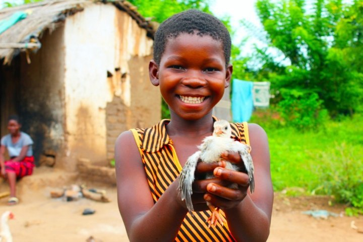 Martha, 13, with one of her family's precious chicks in Mlolo, Malawi. Photo: Jason Kennedy / Concern Worldwide