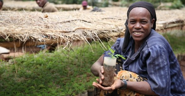 Shuble Baza, who works at a Concern supported nursery in Uguna Fango, Southern Ethiopia. Photo: Kieran McConville / Concern Worldwide.