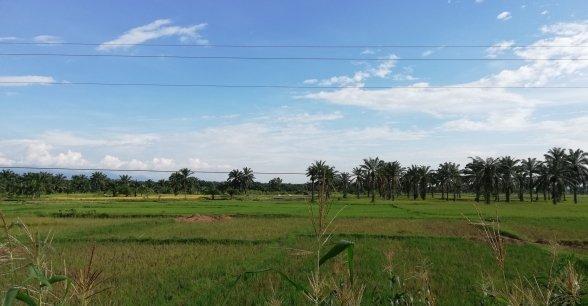 Rice fields in Gisagara District, Rwanda. Photo: Síle Sammon / Concern Worldwide.