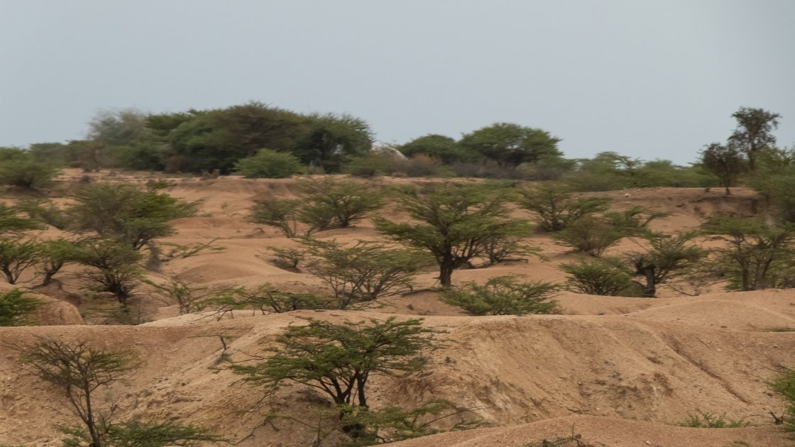 The harsh, arid landscape between Hargeisa and Borama.
