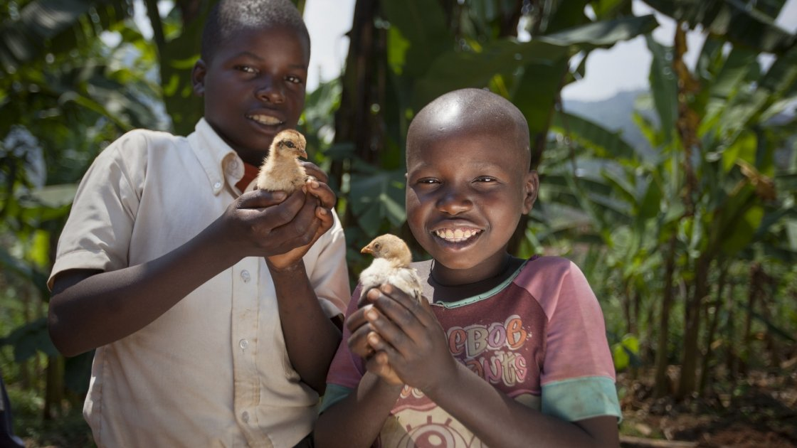 Kevin Niyomuhoza (6) and Olivier Iranyumviye (10) with their chickens. Photo: Abbie Trayler-Smith / Concern Worldwide.