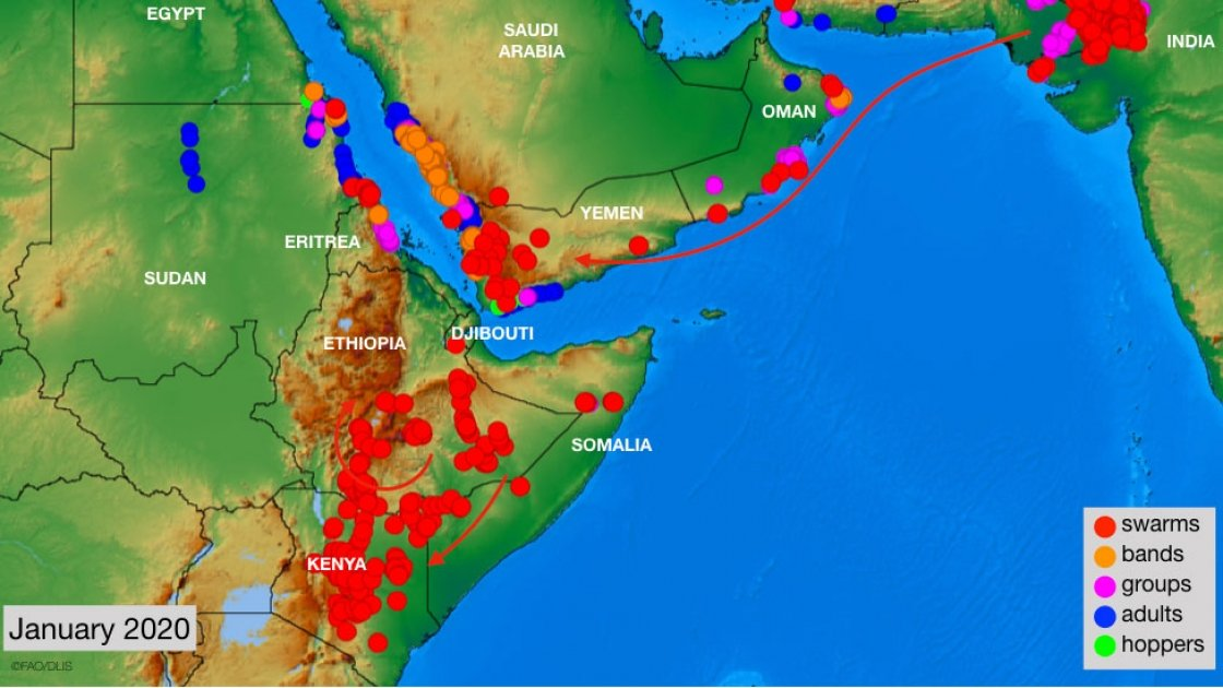 East Africa locust infestation map