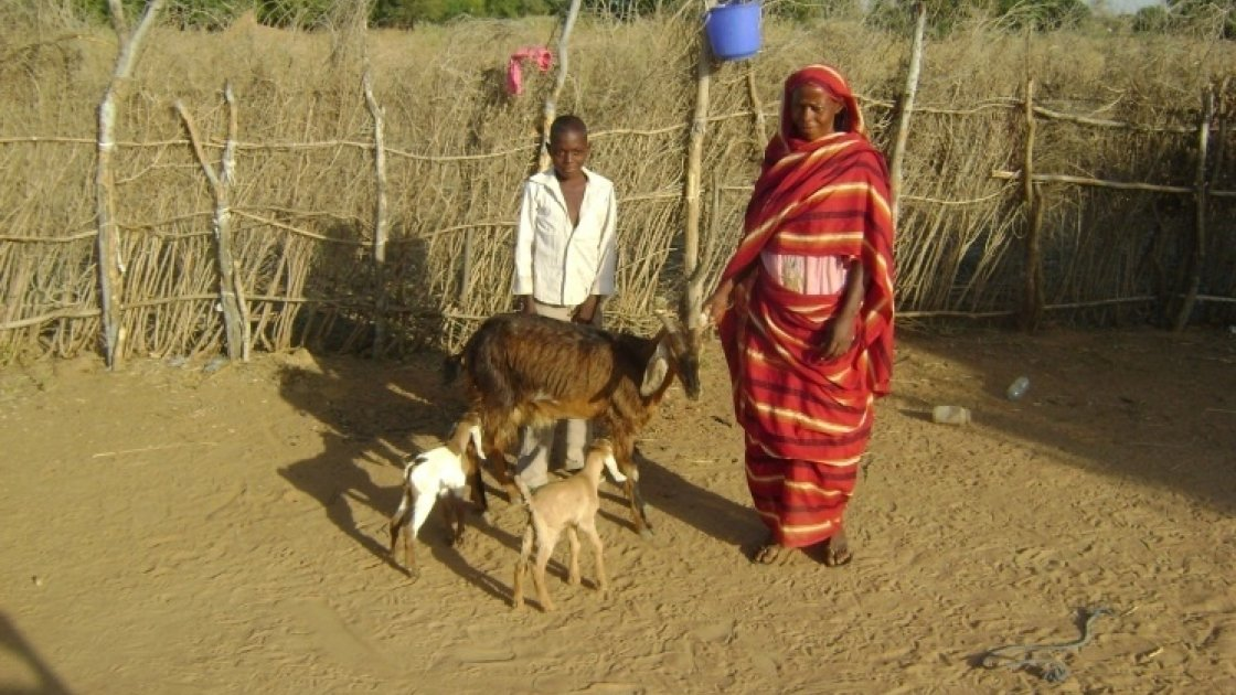 Muna Abu Jabar with her son Ahmed and their goats in Muglad, South Kordofan, Sudan. Photo taken by Concern Worldwide 2012.