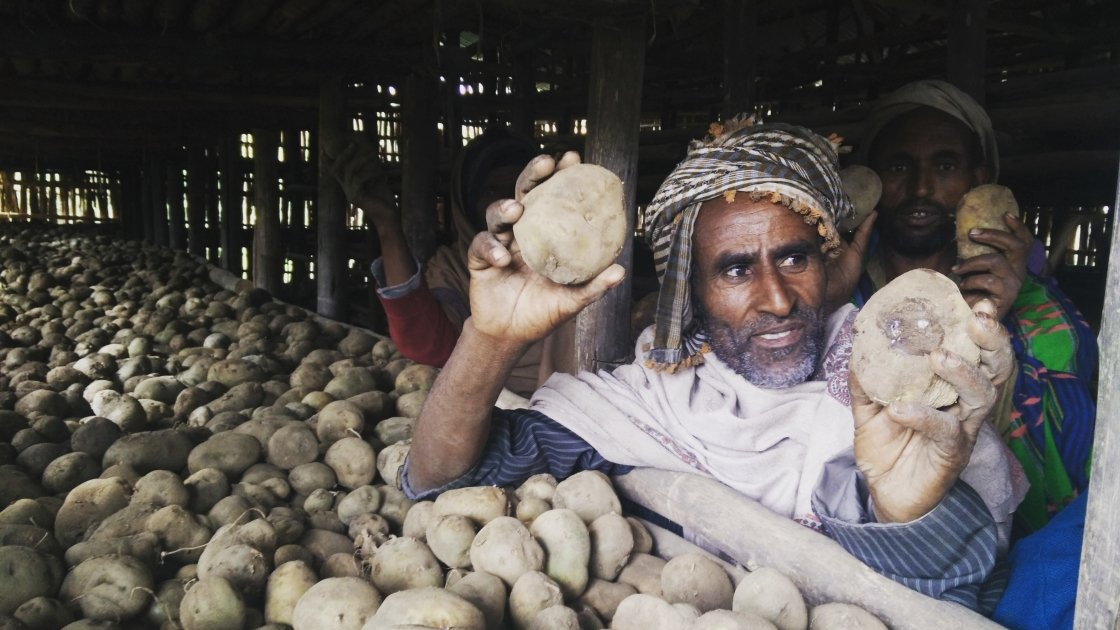 Kasam Hussein, a local farmer, with potatoes grown from Concern Worldwide's donation of 50kg of potato seeds to villagers in Dessie Zuria, Ethiopia. Photograph taken by Sahedul Islam/Concern Worldwide.