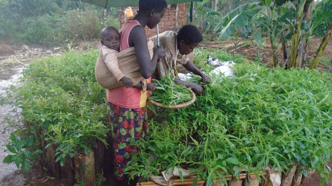 Emelyne Niyokindi, Beatrice Mukanyamibwa with Messi Niyonkinzo looking after their Kitchen Garden in Burundi. Photo: Concern Worldwide.