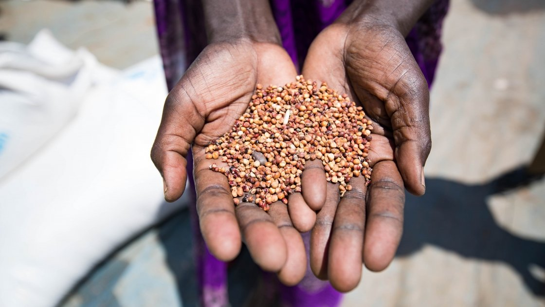 A beneficiary holds up grains provided by the WHO and distributed by Concern Worldwide