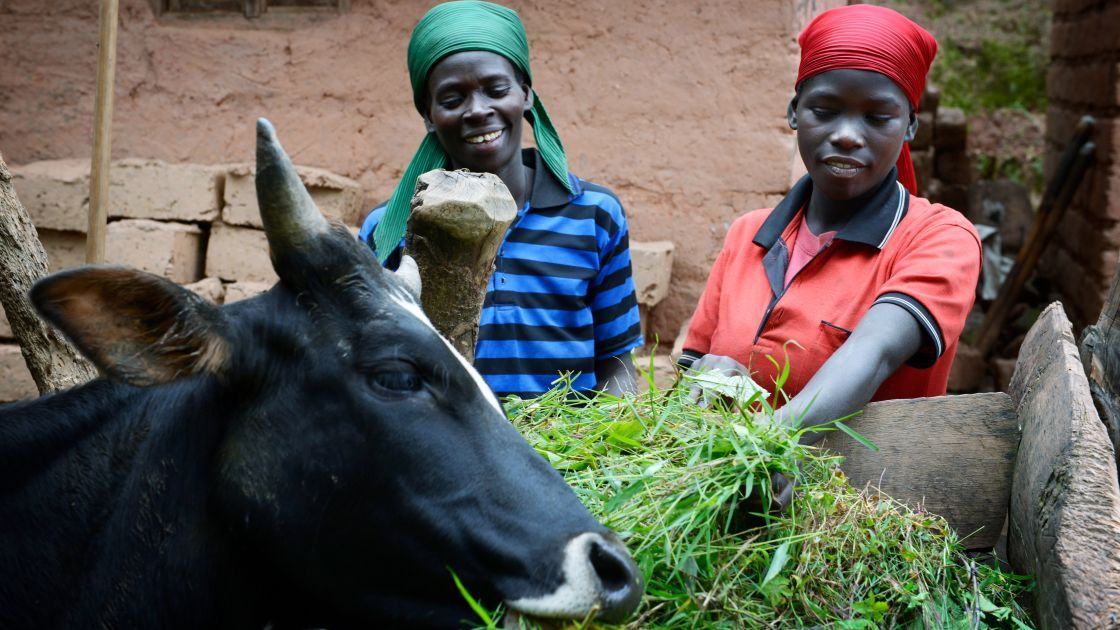Esperence Kayobera (32) with her daughter Penina (15) feeding the family cow, Burundi 2017. Photo: Chris de Bode/Concern Worldwide