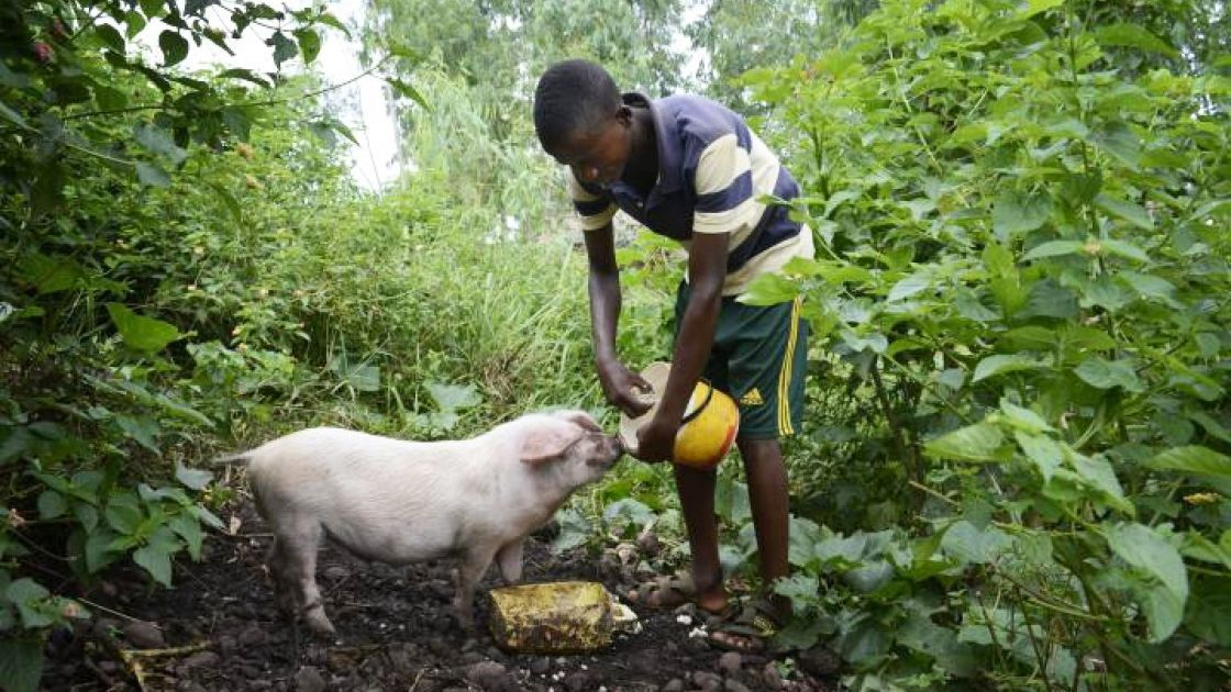 18-year-old Jack helps look after the family pig, along with six goats, some chickens and pigeons. Photo: Chris de Bode/Concern Worldwide, Burundi, 2017.