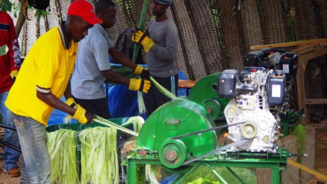 Programme participants processing sisal fibres on new machinery purchased by Concern.