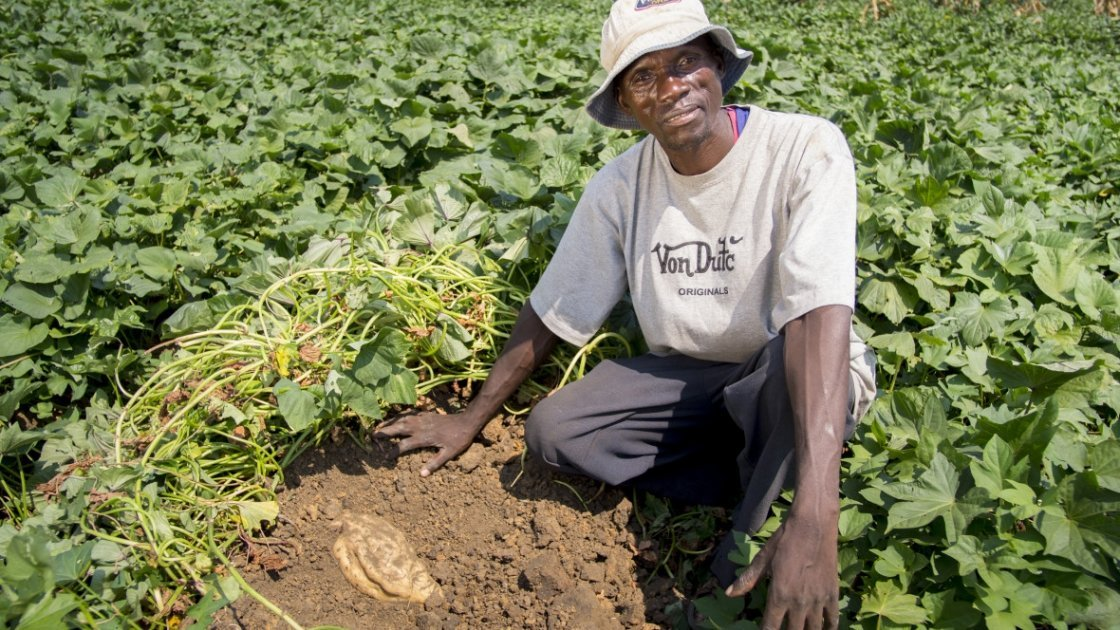 Davidson John, in the communal plot of orange-fleshed sweet potato being grown by his farmer group in Malawi. Photo taken by Kieran McConville / Concern Worldwide.