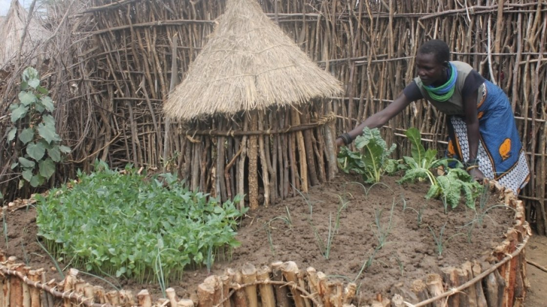 Keyhole gardens can produce very high yield of crops. Photo: Lauren Rogers-Bell/Concern Worldwide.