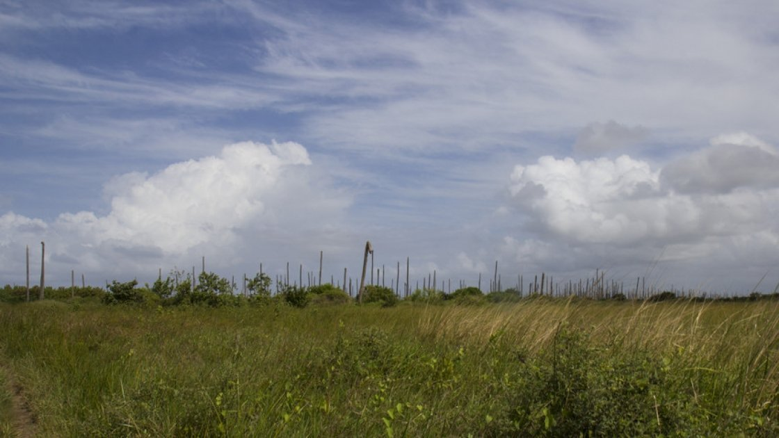 A former coconut grove devastated by lethal yellowing disease. Photo: Concern Worldwide.