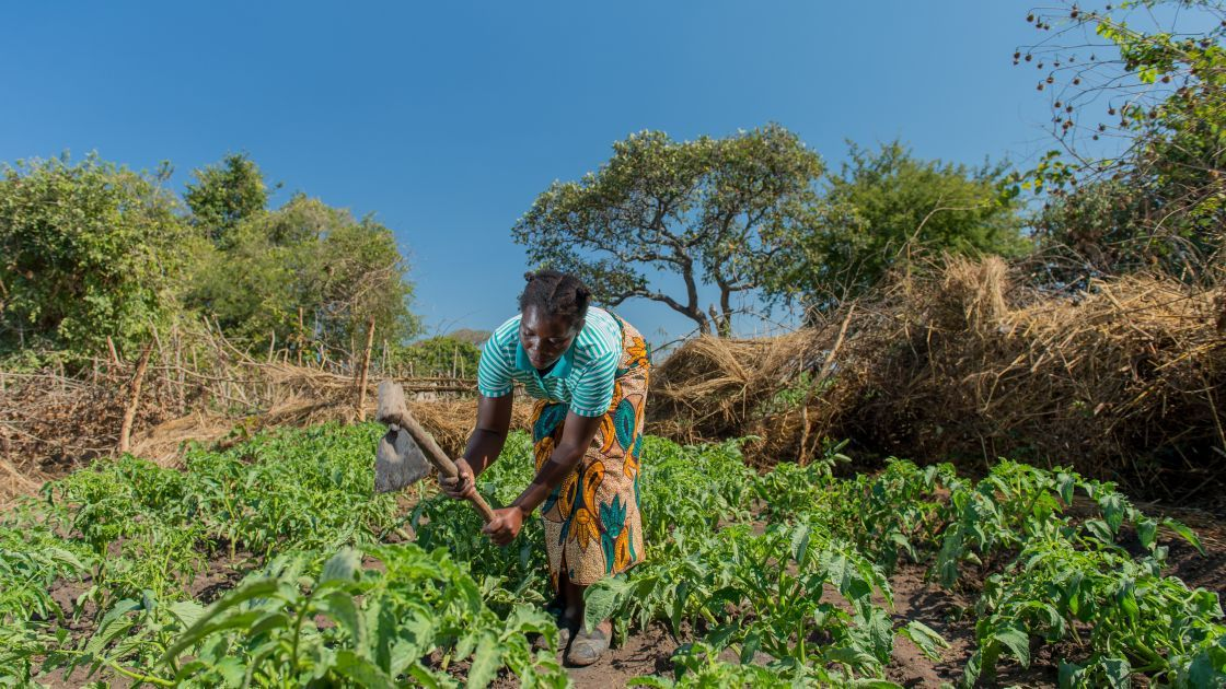 Queen, 36, works in her vegetable garden. Queen is a participant in Concern's RAIN programme and has received tools, seeds, livestock, and training. Photo: Gareth Bentley / Concern Worldwide.