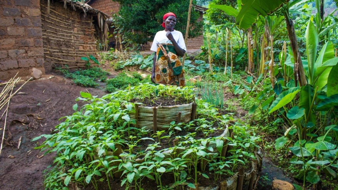 A thriving kitchen garden in Burundi, constructed with support from Concern. Photo: Concern Worldwide.