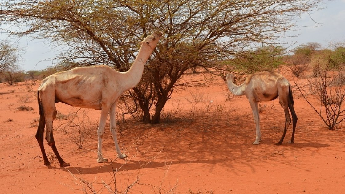 Drought in Somalia is causing grave food insecurity currently. Photo: Concern Worldwide.