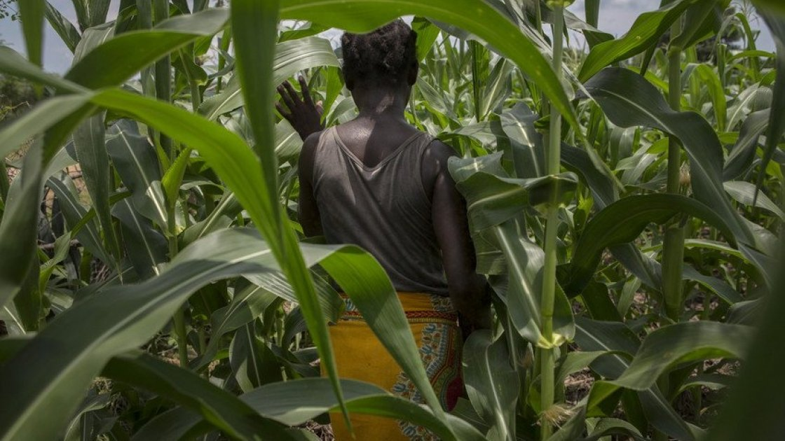Alyne Mpunga walks through her field of maize,  the result of her work on Concern's conservation agriculture project in Malawi