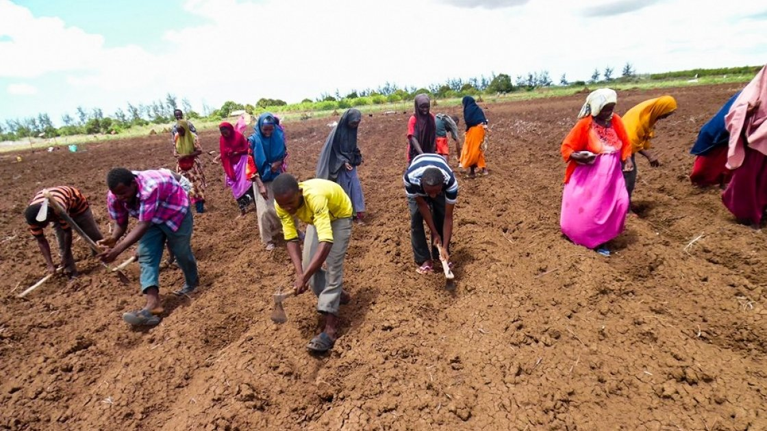 Somalia Jowhar Awdhegle Farmer Field School group planting Maize and Groundnut crops on their communal farm. Photo: Dustin Caniglia/ Somalia /2015