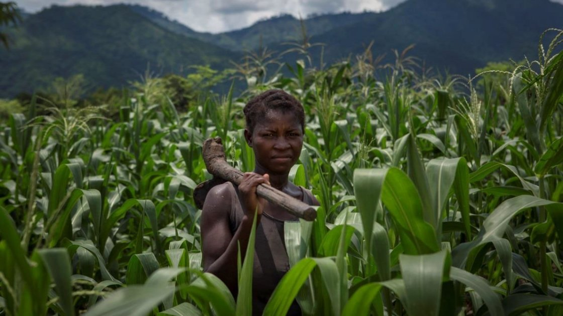 Alyne Mpunga stands in her field of maize in Malawi, the results of her work on Concern's conservation agriculture project. Photo taken by Alexia Webster for Concern Worldwide.