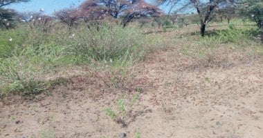 Locusts in Dukana and North Horr in Marsabit County in Kenya where Concern Worldwide is assessing the damage the swarms are having on communities.