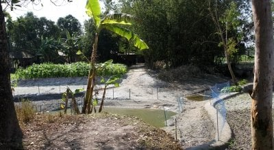 Netted small pond beside banana trees, crop filed, famed vegetation and bamboo thickets beside local houses, Dhubni village, Singimari Union, Hatibanda, Lalmonirhat, 2019.