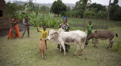 Since joining Concern's liveihood programme, Mestawat Sorsa has acquired a donkey, a cow, and a sheep,.