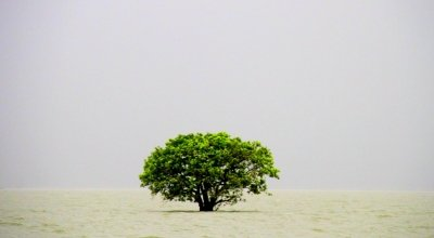 A tree submerged in a Haor (a local term used to describe a wetland ecosystem). Photo: Sadia Hossain / Concern Worldwide.